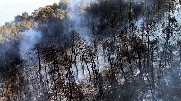Μεγάλη φωτιά σε δάσος στα Μέγαρα