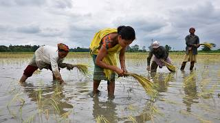 Agriculture is one of the culprits behind India's water crisis