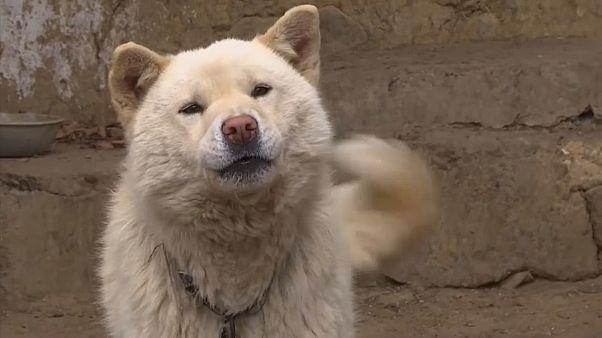 دراسة علمية: الكلاب تستخدم أعينها لاستجداء عطف ومحبة الإنسان