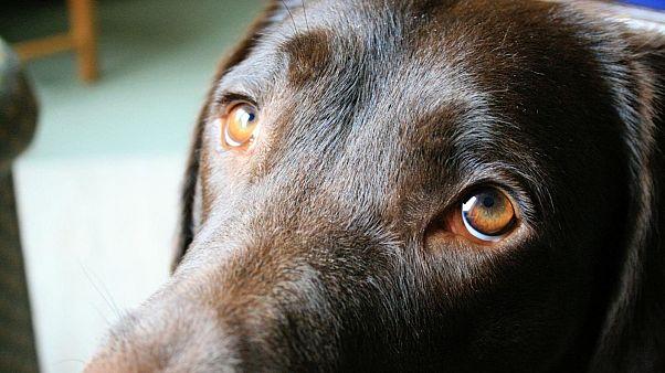 A kutyák a tekintetükkel szólítják meg az embereket