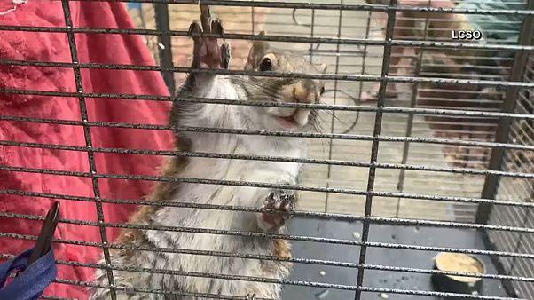 35-Jähriger füttert Eichhörnchen mit Crystal Meth
