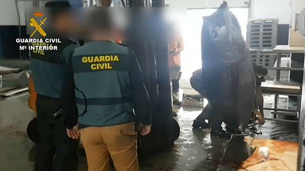 Detenidos con dos toneladas de atún rojo