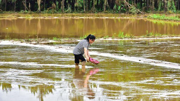 شاهد: أمطار الصين الموسمية مستمرة ورفع التحذير للون الأحمر في تونغلو