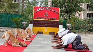 Hindistan Ordusu köpekleri yoga yaptı