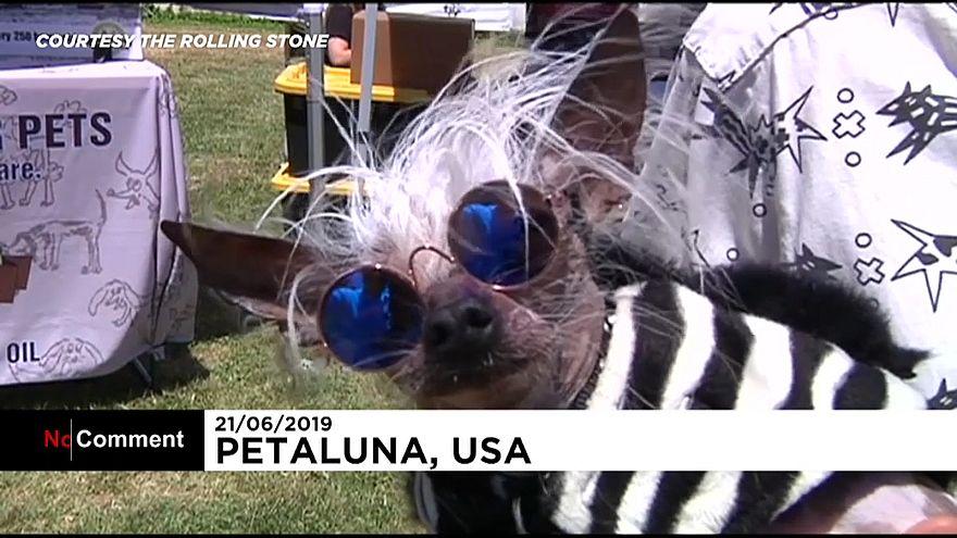 ویدئو؛ مسابقه زشتترین سگ دنیا در کالیفرنیا