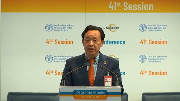 Newly-elected FAO Director-General Qu Dongyu addresses the UN body