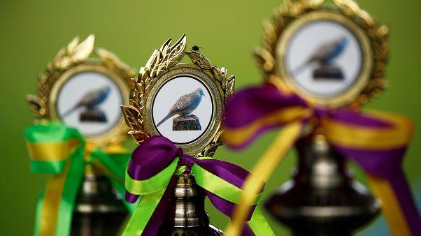 شاهد: مسابقات غناء الطيور تنافس مسابقات غناء البشر في سنغافورة!