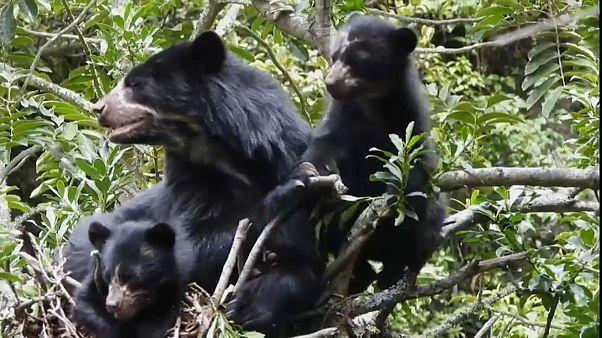 مجموعة من الدببة