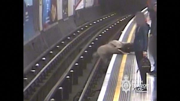 Sir Robert Malpas fell onto the tracks as a train approached