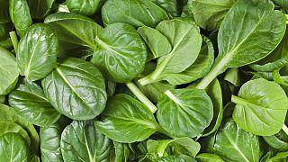 Forscherin empfiehlt: In Spinat enthaltene Substanz soll auf die Dopingliste