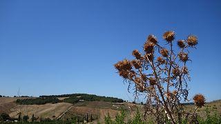 Летняя жара за +40°C становится нормой для Европы