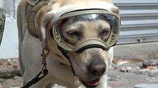 شاهد: حفل تقاعد كلبة الإنقاذ المكسيكية فريدا