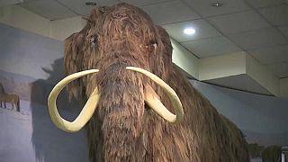 Paleontólogos russos descobrem ossada de mamute lanoso