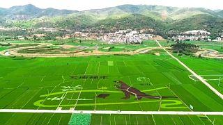 شاهد: ديناصور عملاق في حقول الأرز الصينية يستقطب الزوار