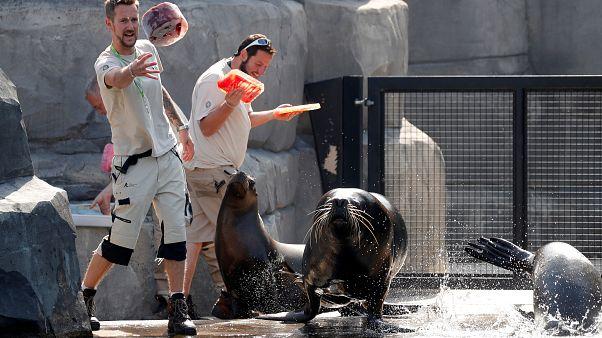 Arrefecer o ambiente no Zoo de Paris
