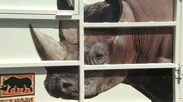 الأقفاص التي نقل فيها وحيد القرن