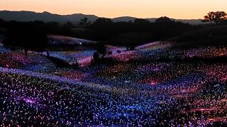 """Field of Light"", l'exposition qui illumine les collines californiennes"