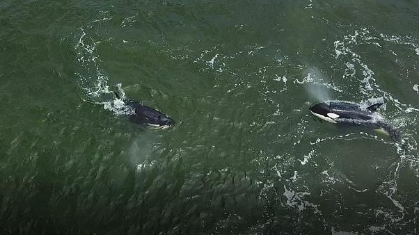 Выпустили или выкинули: как освобождали узников «китовой тюрьмы»?