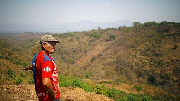 Productores de café centroamericanos condenados a migrar