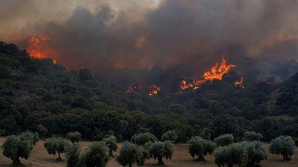Südwesteuropa: Rekordtemperaturen begünstigen Waldbrände