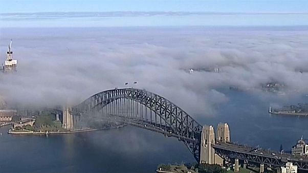 شاهد: اشهر معالم سيدني الأسترالية تختفي عن الأنظار وراء الضباب