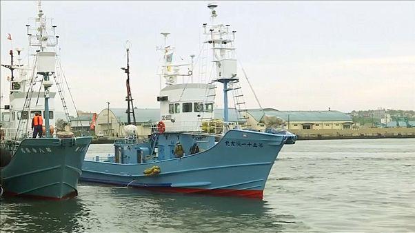 Japón vuelve a cazar ballenas con fines comerciales