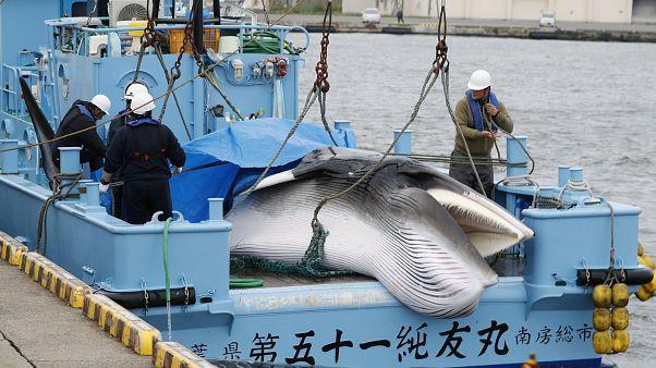 No solo Japón se salta el acuerdo internacional, ¿qué otros países siguen cazando ballenas?
