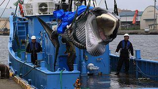 تعرف على الدول التي تجيز صيد الحيتان لأغراض تجارية