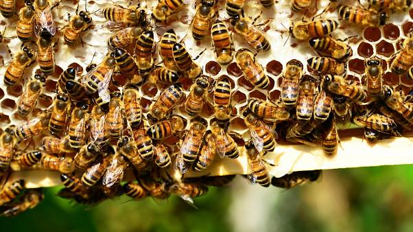 Two tourists attacked by swarm of bees in France