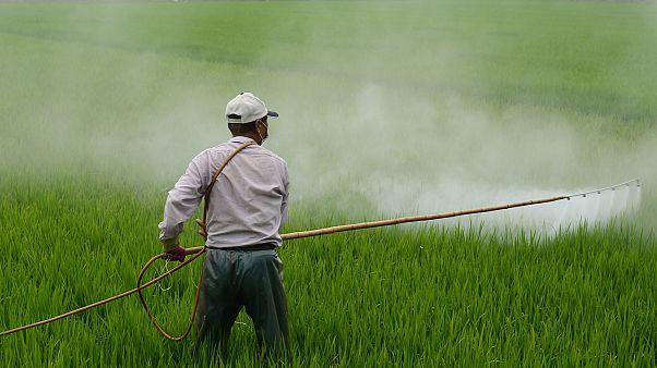 Avusturya tartışmalı tarım ilacı glifosatı yasaklayan ilk AB ülkesi oldu