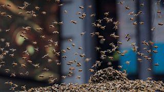 Arı sürüsü