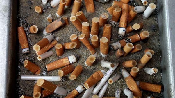 Cigarettacsikkel etette fiókáját a madár