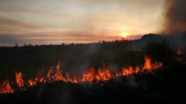 Rápida destrucción de la Amazonía brasileña