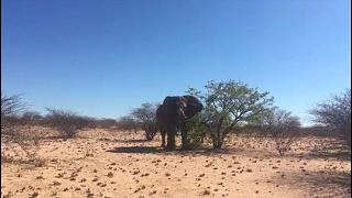 Killing of 'iconic', 50-year-old elephant in Namibia sparks outcry