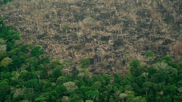 Амазония: «контроль ослабевает»