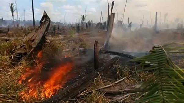 Gátlástalanul irtják az amazonasi őserdőt