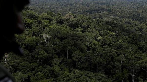 Sharp Rise In Amazon Deforestation In Brazil Under Bolsonaro
