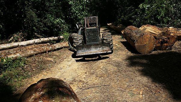 سیاستهای دولت جدید برزیل و افزایش ۸۸ درصدی جنگلزدایی در آمازون