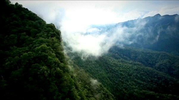 Neue Studie: Bäume als Klimaretter