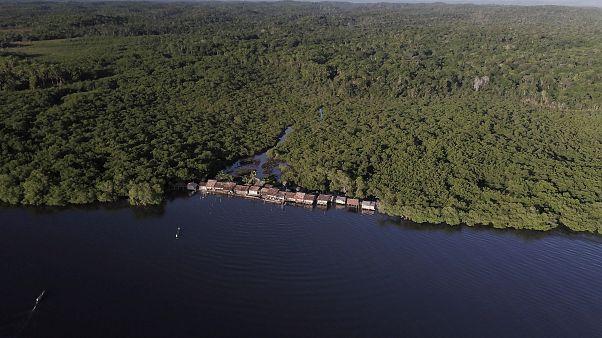 Brazil mangroove-erdő