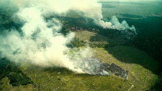 Bolsonaro niega la fuerte deforestación de la Amazonía desde que está en el poder