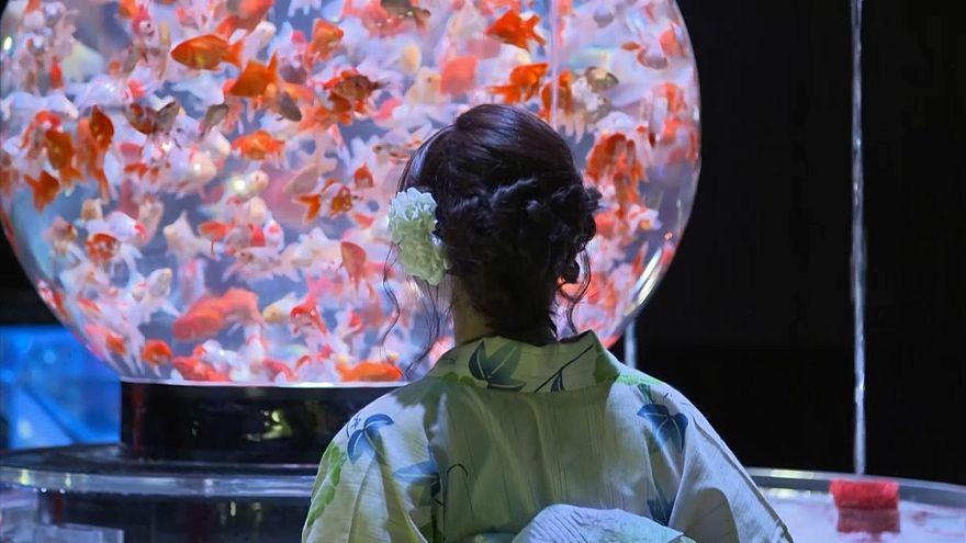 ژاپن؛ ماهیهای قرمز در آکواریوم هنری توکیو