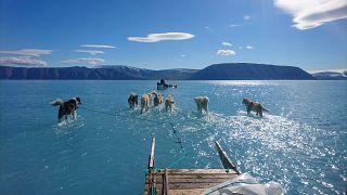 VIDEÓ: a jég helyett vízben szánt húzó kutyákról