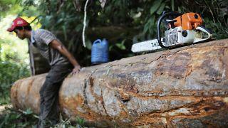 Amazonlarda bir orman köylüsü