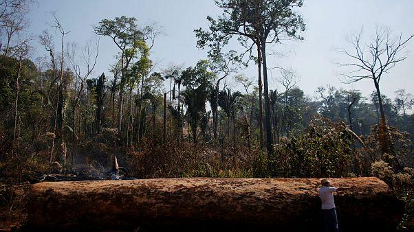 Amazonlardaki tahribat yüzde 88 arttı; Bolsonaro'dan Macron ve Merkel'e davet