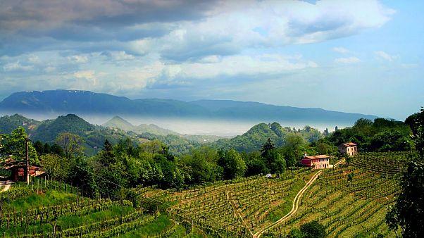 Le colline venete del Prosecco entrano nel patrimonio Mondiale Unesco