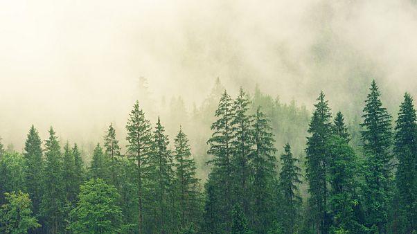 دراسة: زراعة ترليون شجرة كفيل بإنقاذ العالم