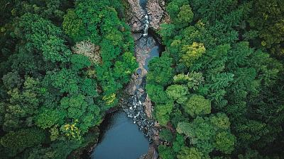 Rain forest from above