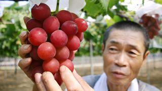 Weintrauben für 10.000 Euro versteigert