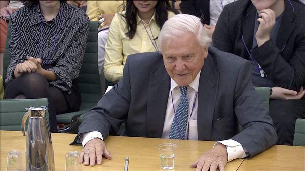 Sir David Attenborough stresses 'radical' change needed to combat climate change